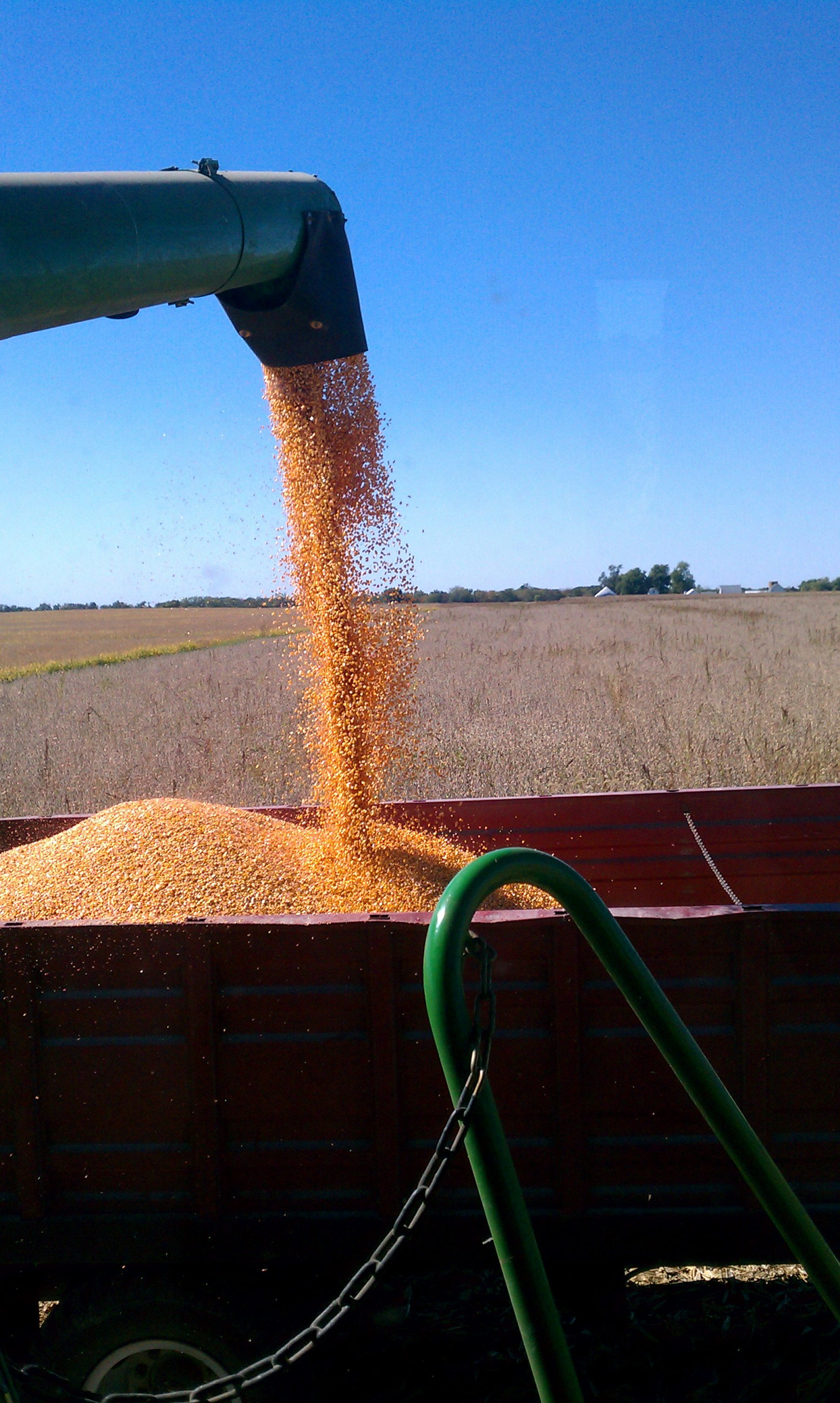 From the combine, into the truck